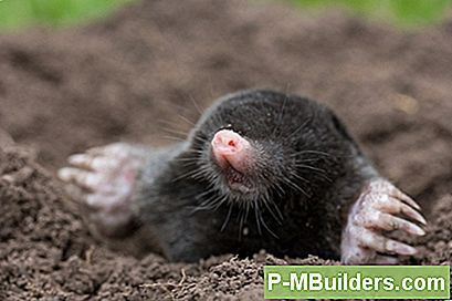 How To Create A Hausgemachte Mole Repellent