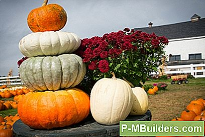 Teie Ultimate Fall Pumpkin Guide