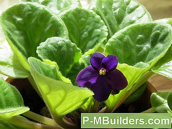 African Violet Care Guide