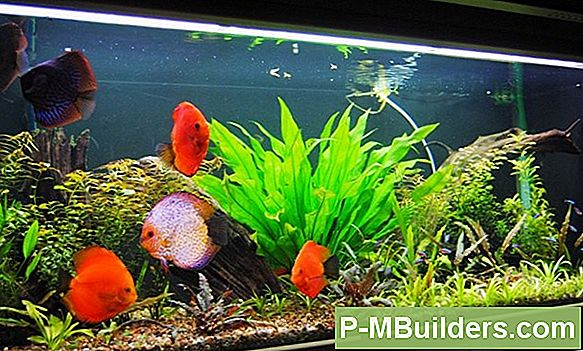 Mount A Wall Aquarium