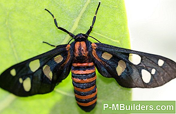 Indian Moth Invasions