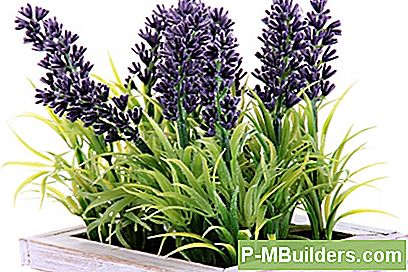 How To Grow Lavendel Drinnen