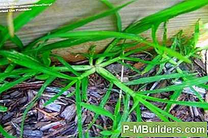 Hur Man Behandlar Crabgrass Problem