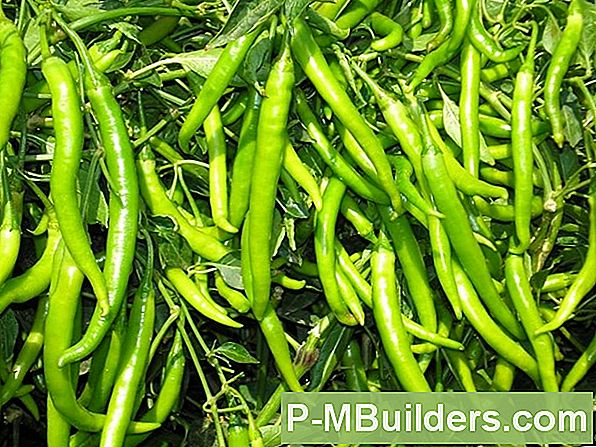 Grow Peppers Hydrocultuur