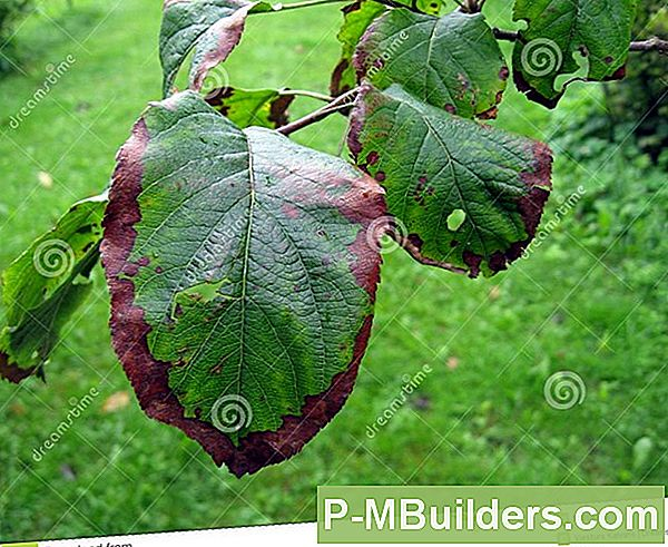 Apple Tree Diseases Voorkomen