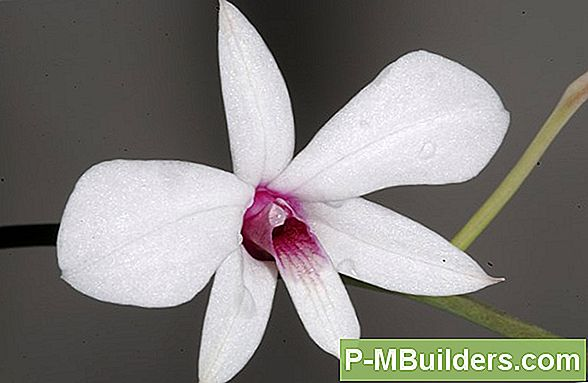 Guide To Orchid Taxonomy
