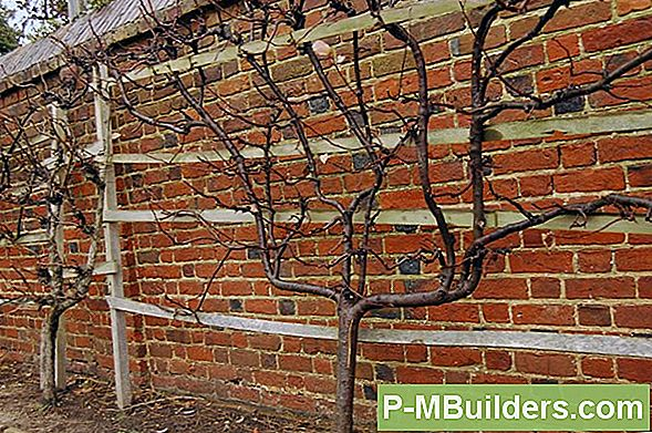 How To Espalier Trees