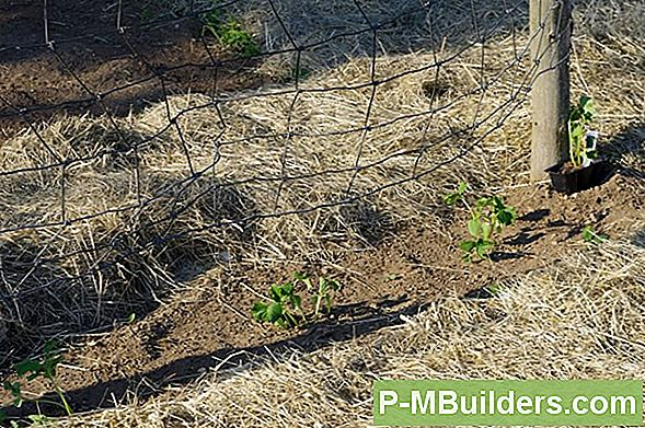 Mulch: Weed Prevention Made Easy