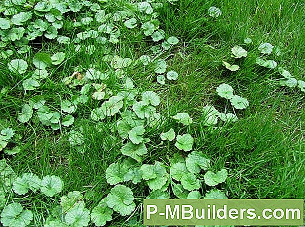 Rid Your Yard Of Clover: 3 Tips