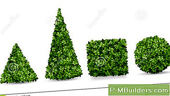 7 Topiary Tree Design Ideed