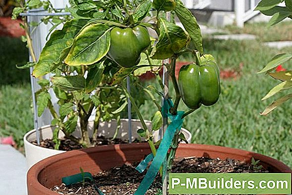 Bell Pepper Companion Planting