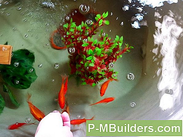 Aquaponics In Cold Climates
