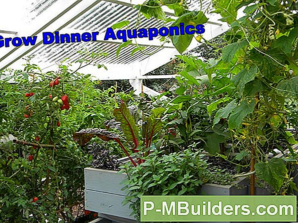 Aquaponics: Good Grow Bed Media