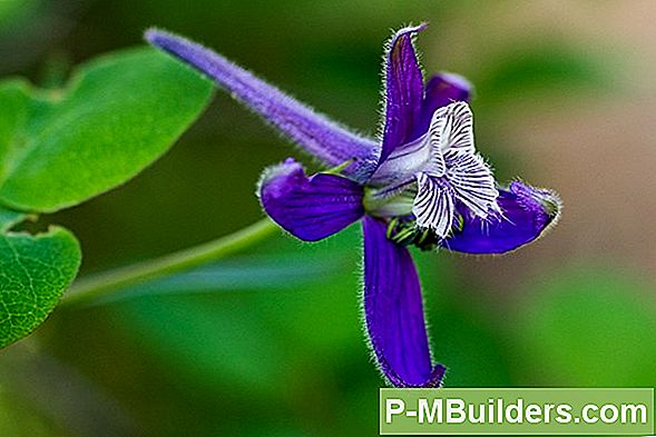 How To Grow Larkspur