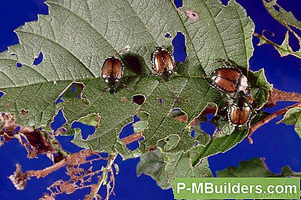 Japanese Beetle - Biological Control
