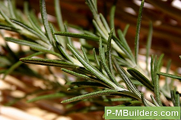 Rosemary, Herb Of Love