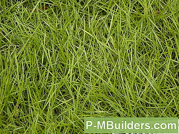 Zoysia Grass Is This The Lawn Of The Future?