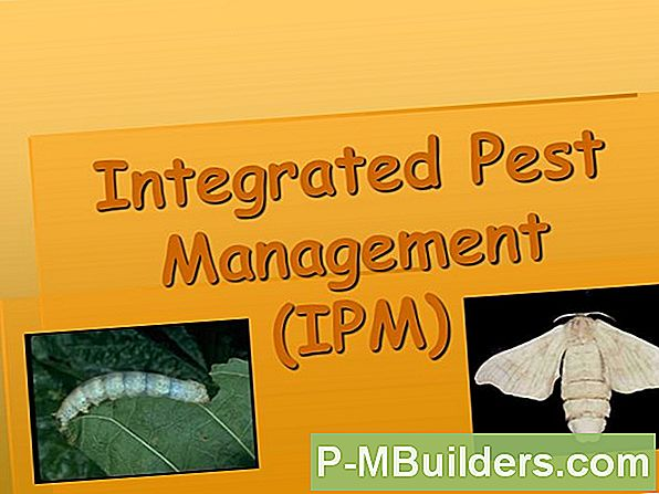 Pest Management - Inledning