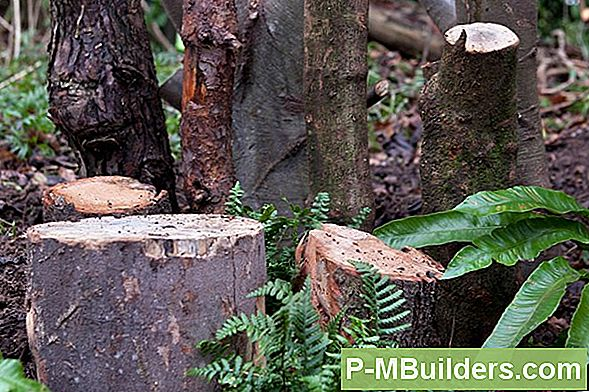 How To Diy A Stumpery